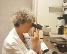 Anakoinosis, un principio terapeutico contro il tumore. Ce ne parla la Prof.ssa Ghibelli dell'Università di Tor Vergata